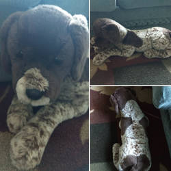 Douglas Marlena german short haired pointer