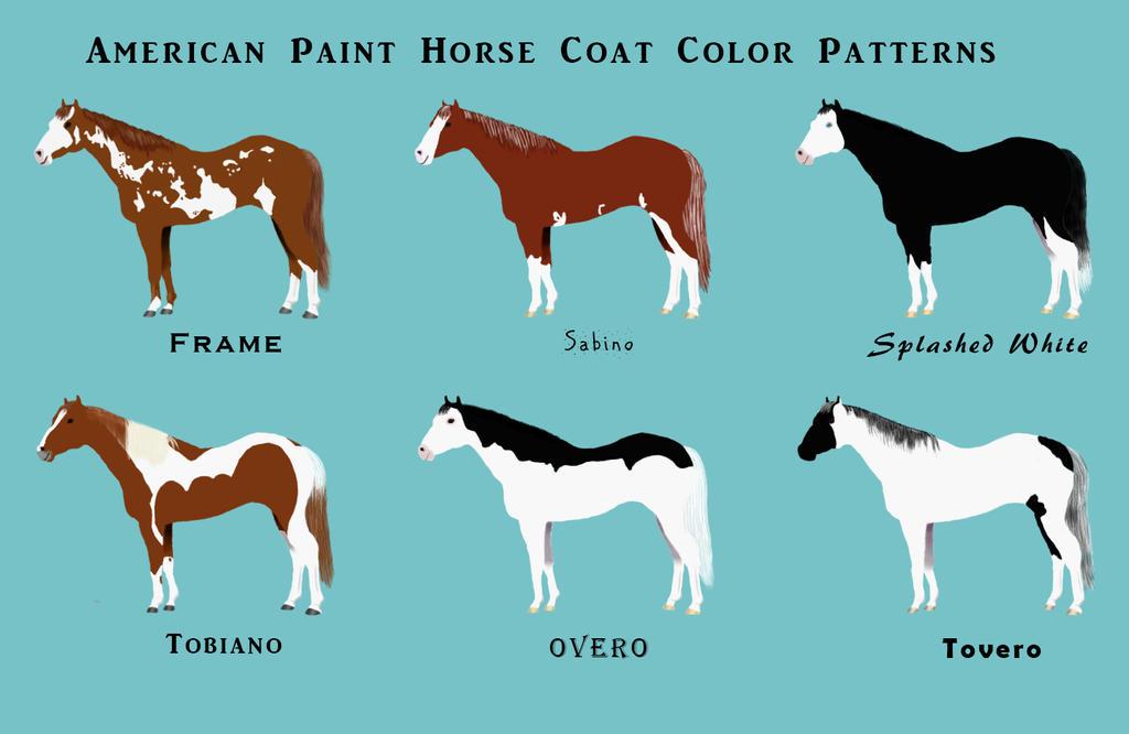 horse coat color chart