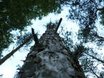 Photography: Woody perspective