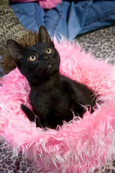 cat in hat? by starfantazy