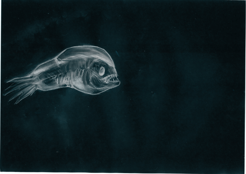 Male deep sea angler fish by lokely on deviantart for Angler fish size