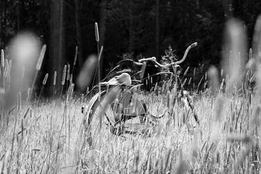 Sunshine bike by Snoozam