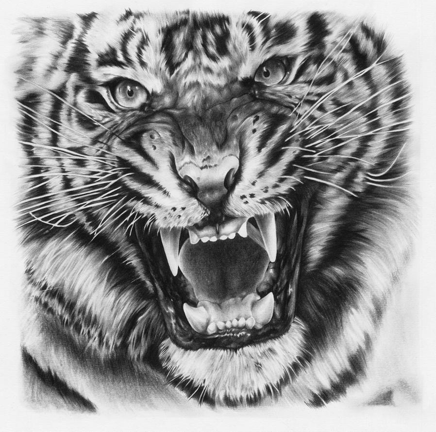 Tiger Drawing By Joshuabeatson On Deviantart
