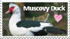 Muscovy Duck Lover by Fantia--Skies