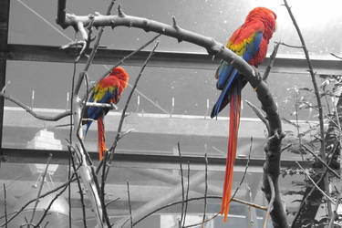 Macaws by Sphien