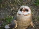 ''Owl.