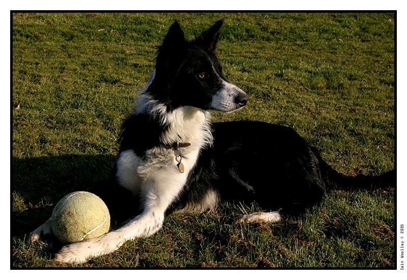 http://fc01.deviantart.com/fs6/i/2005/065/e/a/Collie_by_iswoolley.jpg