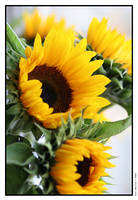 Sunflowers by iswoolley