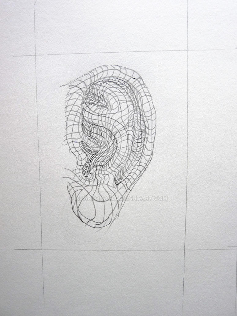 What Is Cross Contour Line Drawing : Cross contour ear by kcarbonari on deviantart