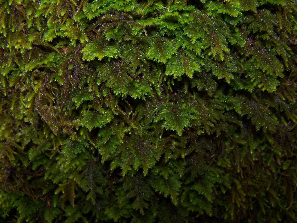 Stock: Fern by Tkrain