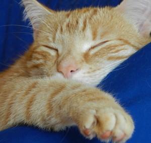 Garfieldheart's Profile Picture