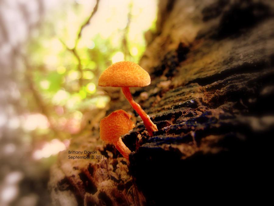 Mushroom Cluster by WonderfulNonsense