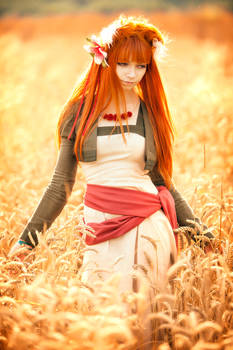 Holo In The Field