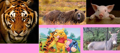 Winnie The Real Pooh