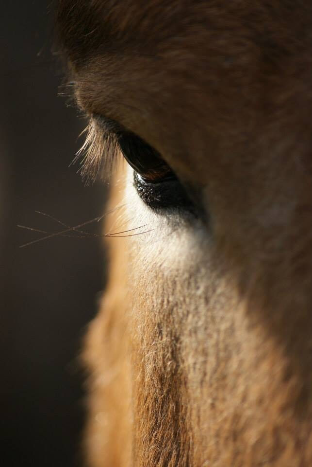 Horse in nostalgy by PoesAnnabel