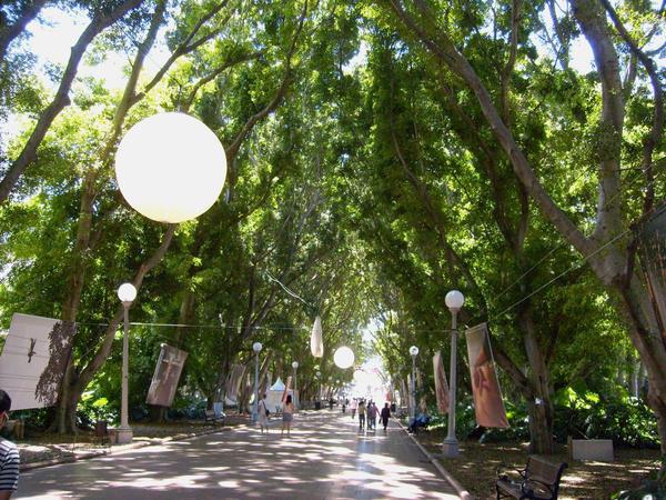 Fig Tree Avenue by ARTmonkey90