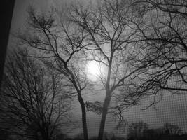 Photography by Muzicrox56