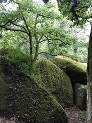 Rocks with moss