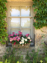 Cottage window with flowers