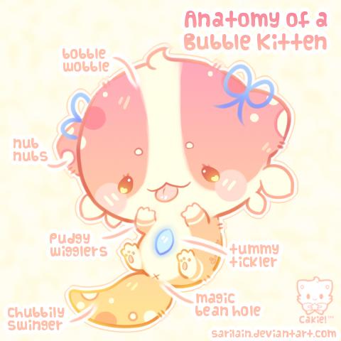 Anatomy of a kitten