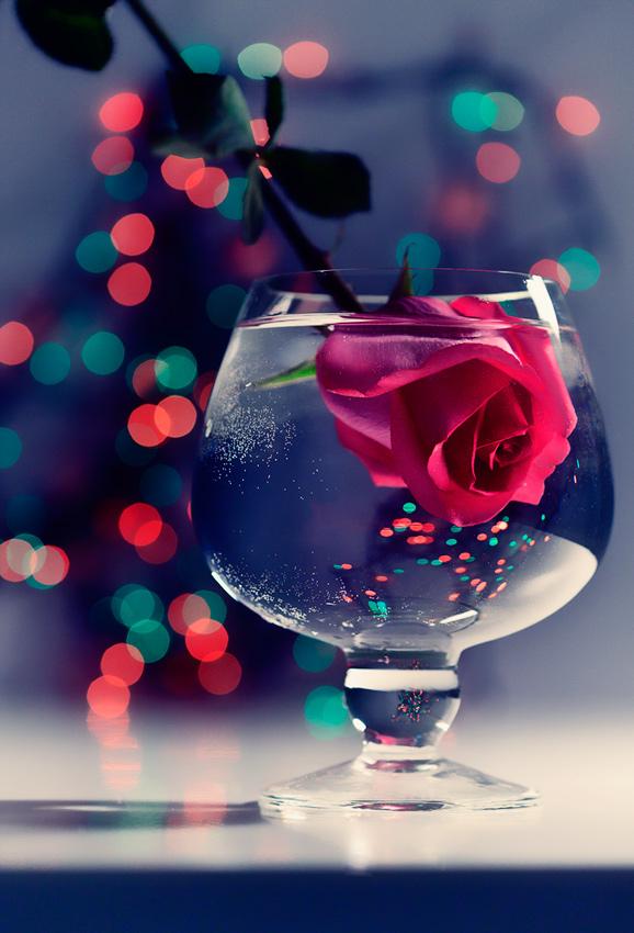romantic rose by LadyMartist