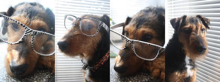 Glasses by Tiegan5