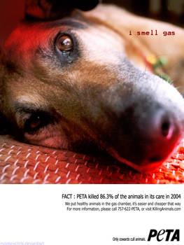 PETA Kill 9 out of 10 animals