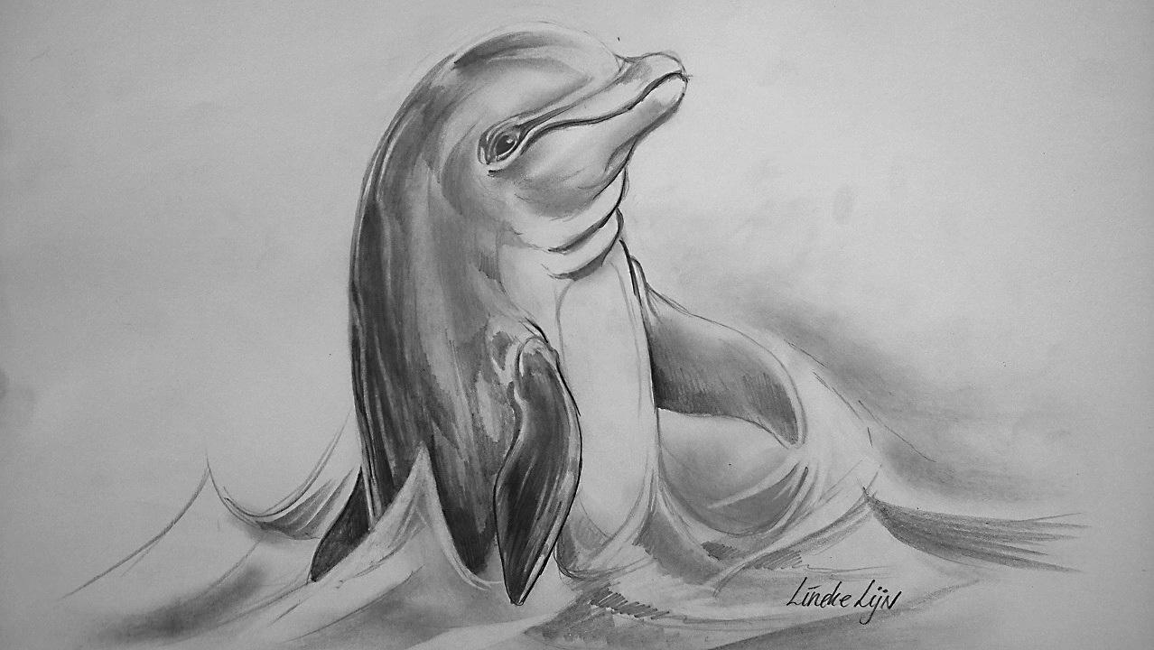 Gratis Kleurplaten Dieren Heel Makelijk Dolphin Tutorial Lineke Lijn By Linekelijn On Deviantart