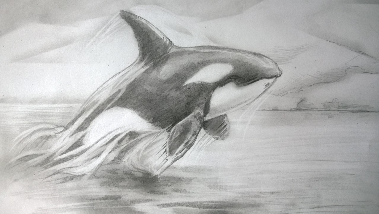 orca study 2 by lineke lijn on deviantart