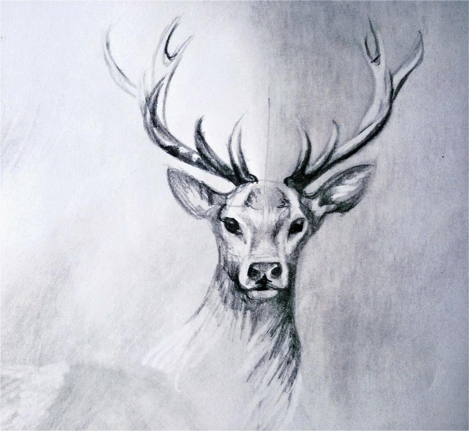deer drawings - photo #31