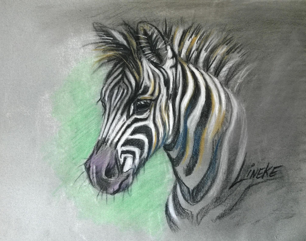 free download for how to draw a zebra foal by lineke lijn