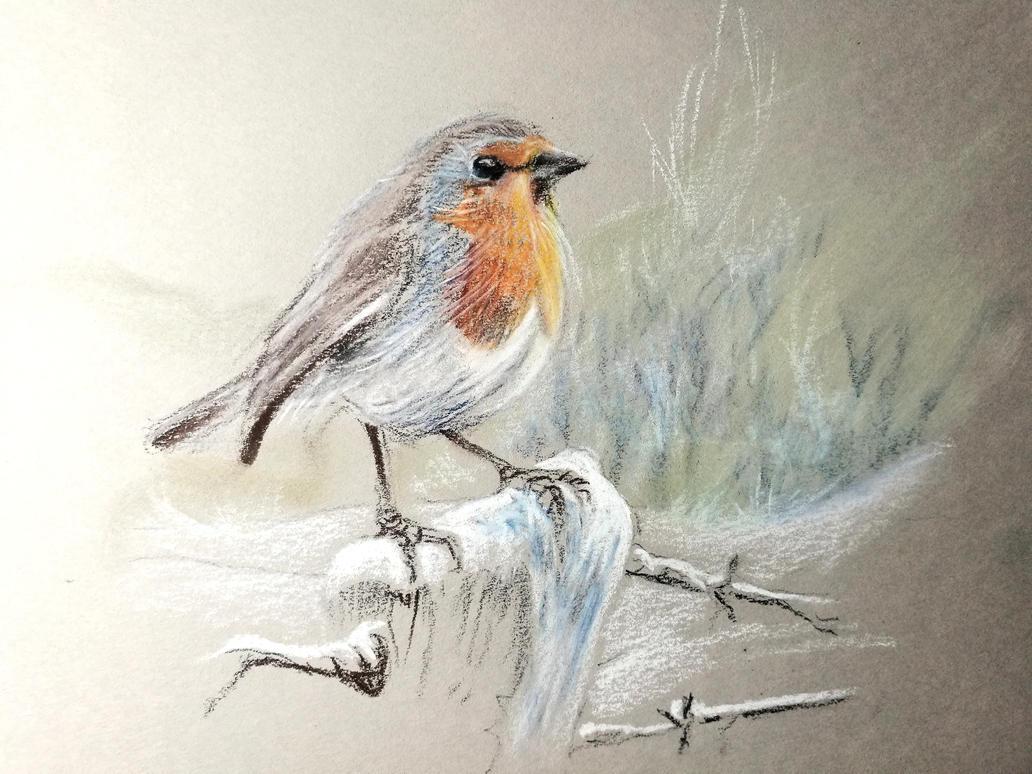 Robin bird in the snow by Lineke-Lijn
