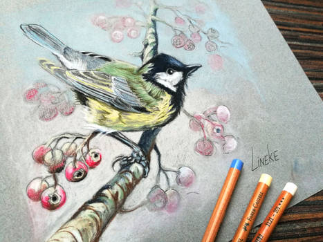 Great Tit in Pastel Pencil