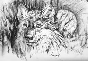 Wolf in the woods - Charcoal sketch by Lineke-Lijn