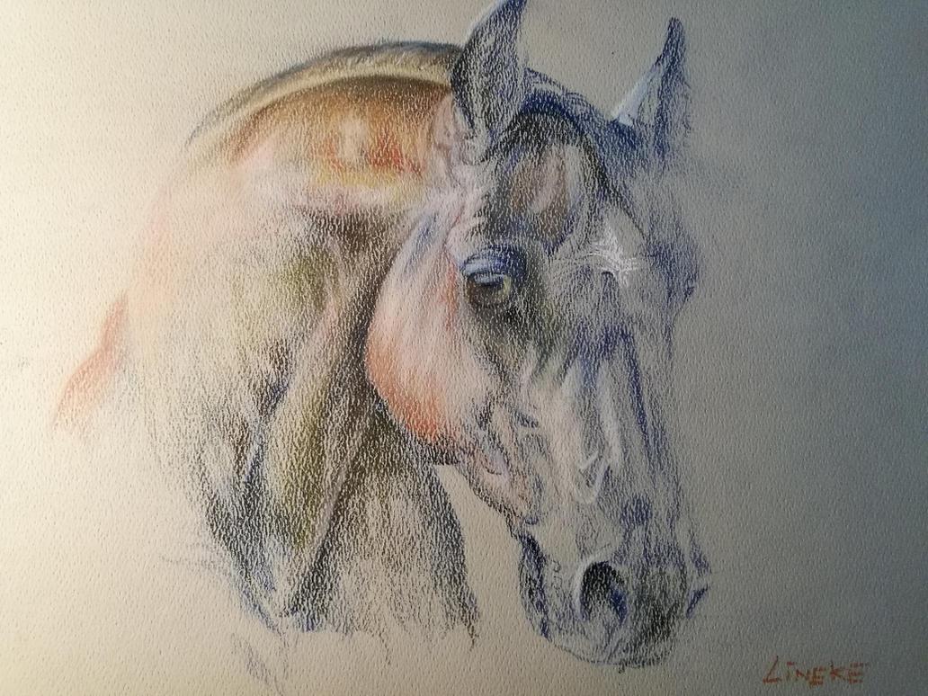 Horse head anatomy study by Lineke-Lijn on DeviantArt