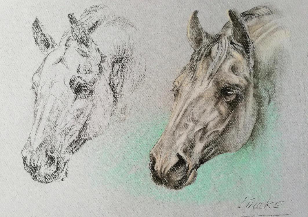 Horsehead anatomy study by Lineke-Lijn on DeviantArt
