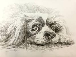 Puppy love by Lineke-Lijn