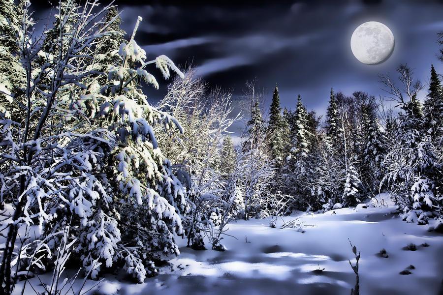 Winter Scene by melissa3339