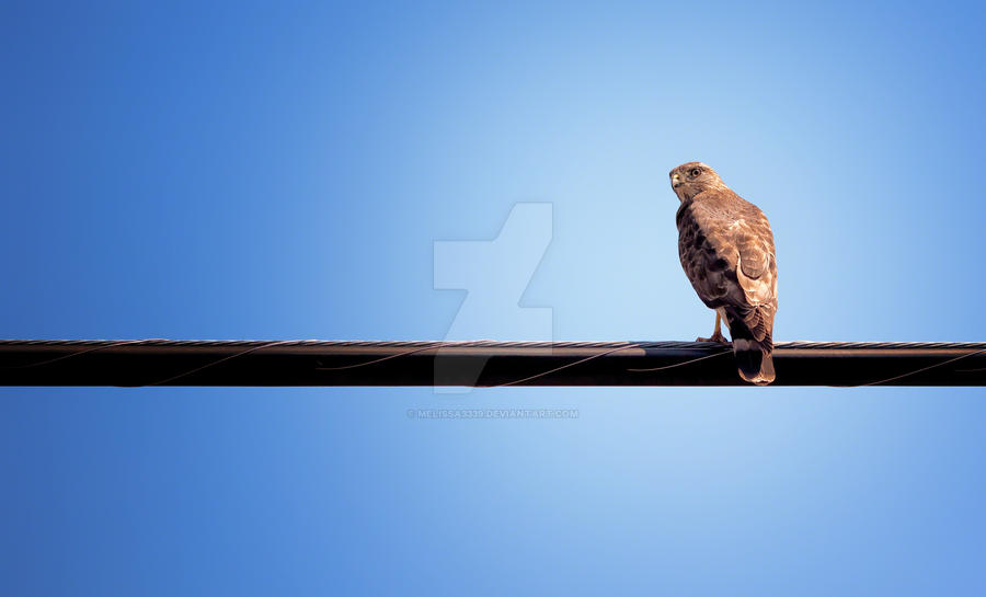 Bird on a Wire by melissa3339