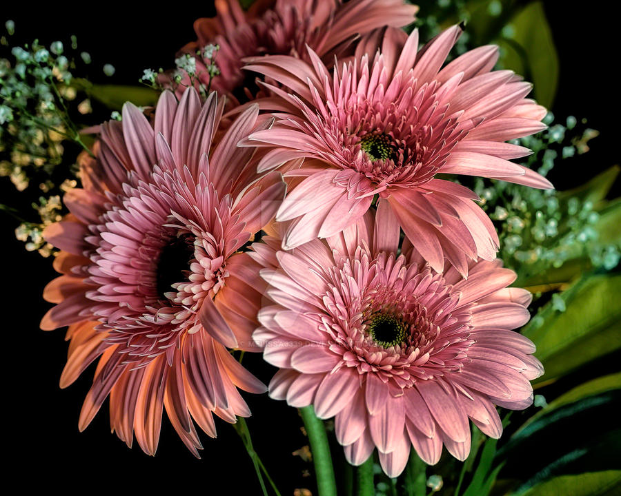 Pink Flowers by melissa3339
