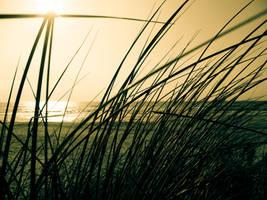'horizon by paz0ok