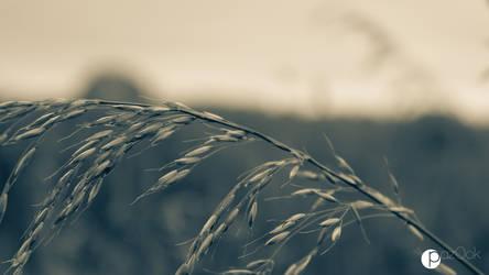 'breeze by paz0ok