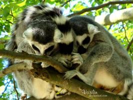Sleep together by Veirilin