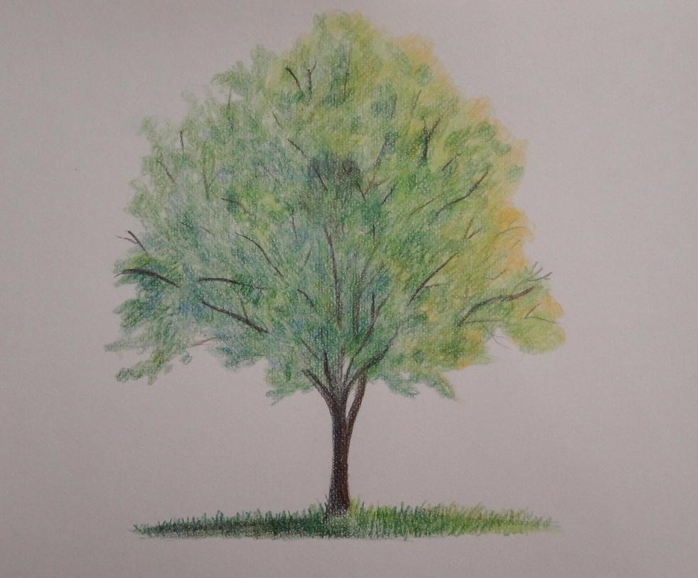 Tree 2 by MisaelRubio