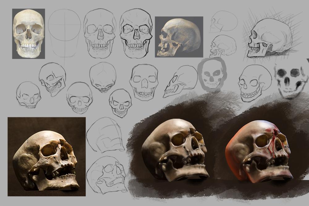 Skull Studies by Yveo