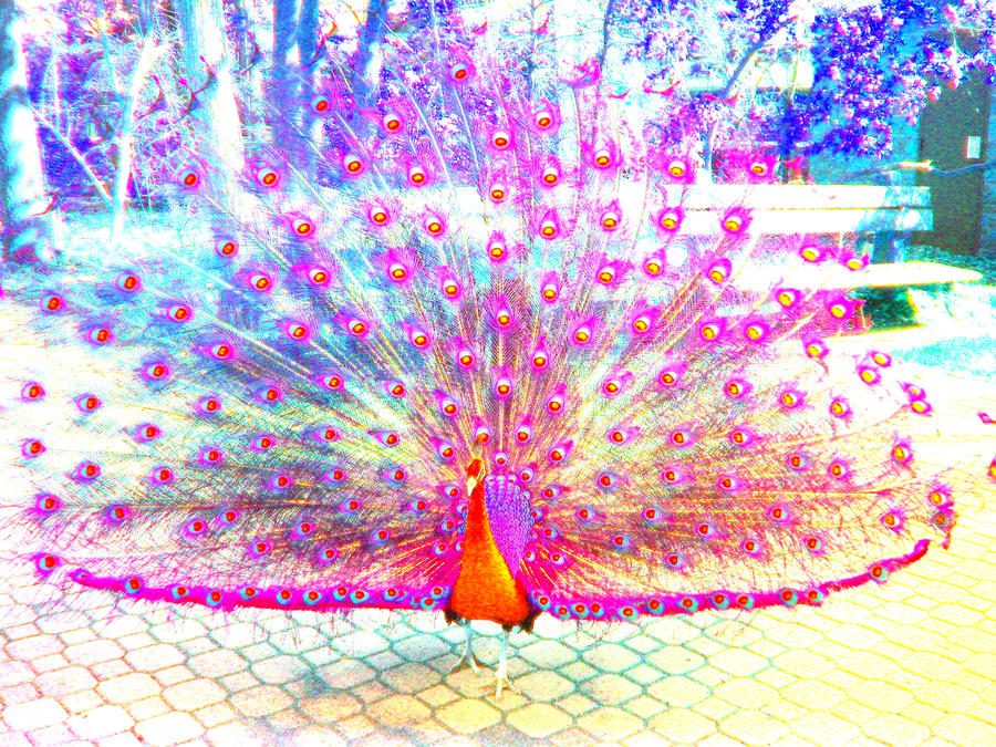 Are pink peacocks real - photo#8
