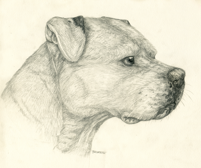 Pencil pitbull by tsebresos on deviantart - Dessin de pitbull ...