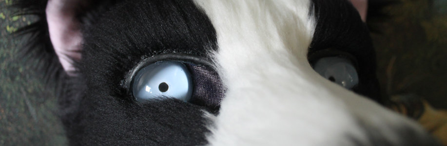 Border Collie Teaser by Tsebresos