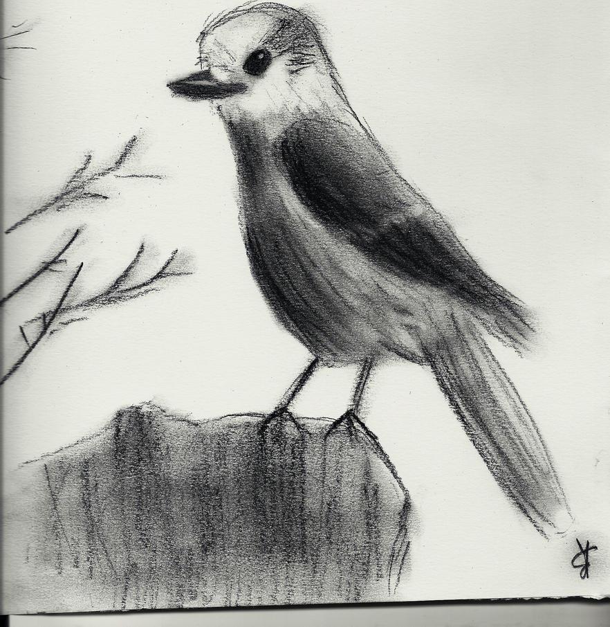 Charcoal Bird / Oiseau Au Fusain By Tikara69 On DeviantArt