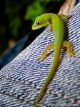 Baby Gecko V4